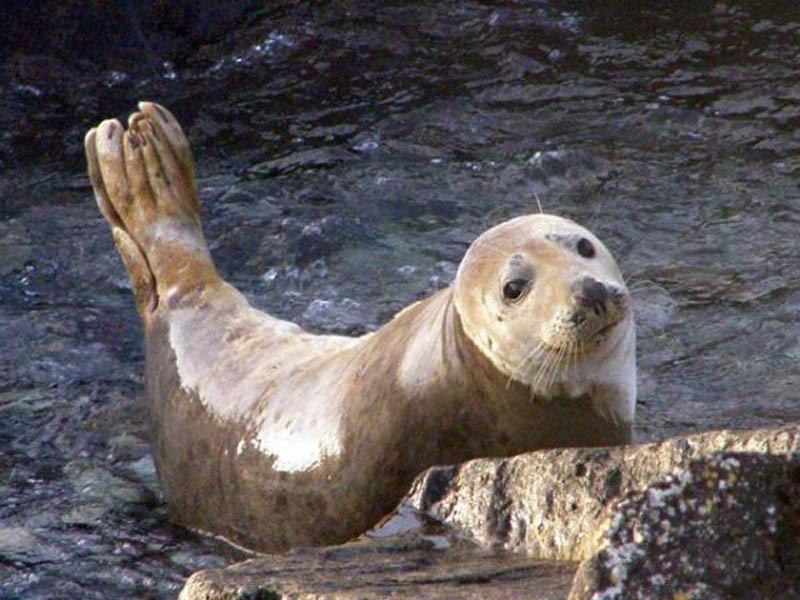 blasket eco marine tours1
